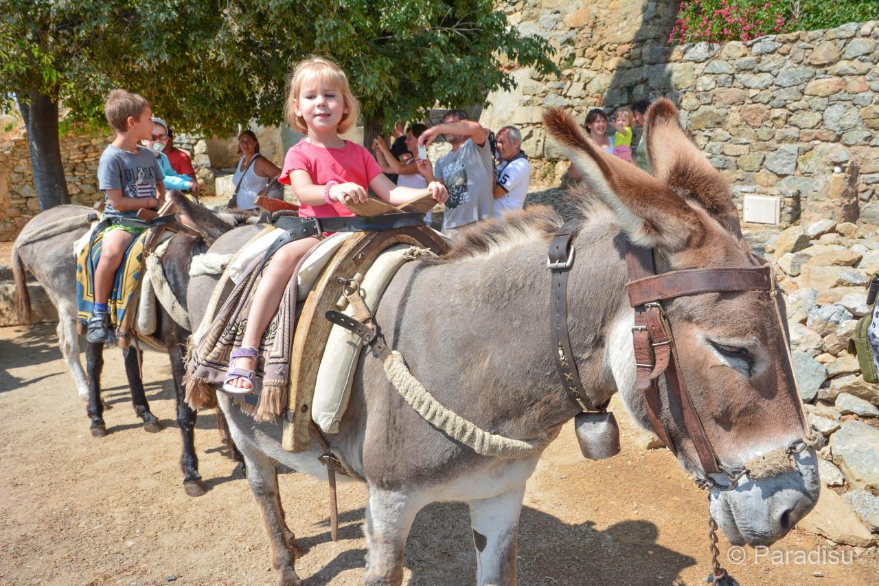 Eselreiten In Der Balagne