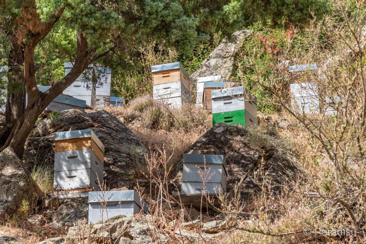 Korsischer Honig Bienenkästen