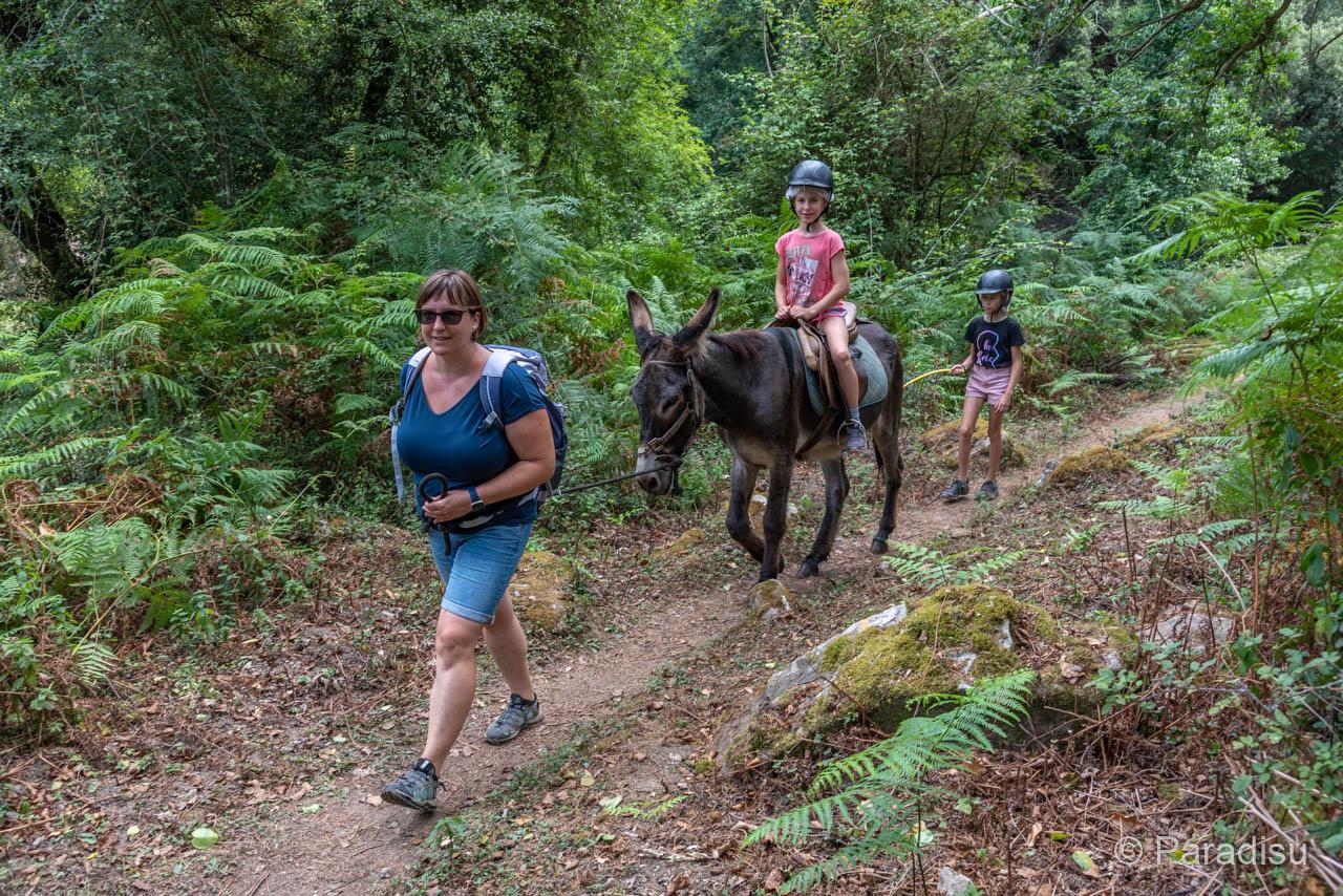 Wanderung Nach Fiuminale Mit Esel