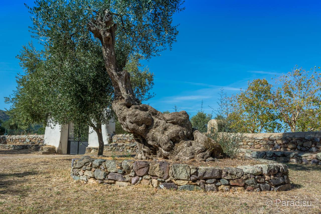 Sainte Restitude De Calenzana