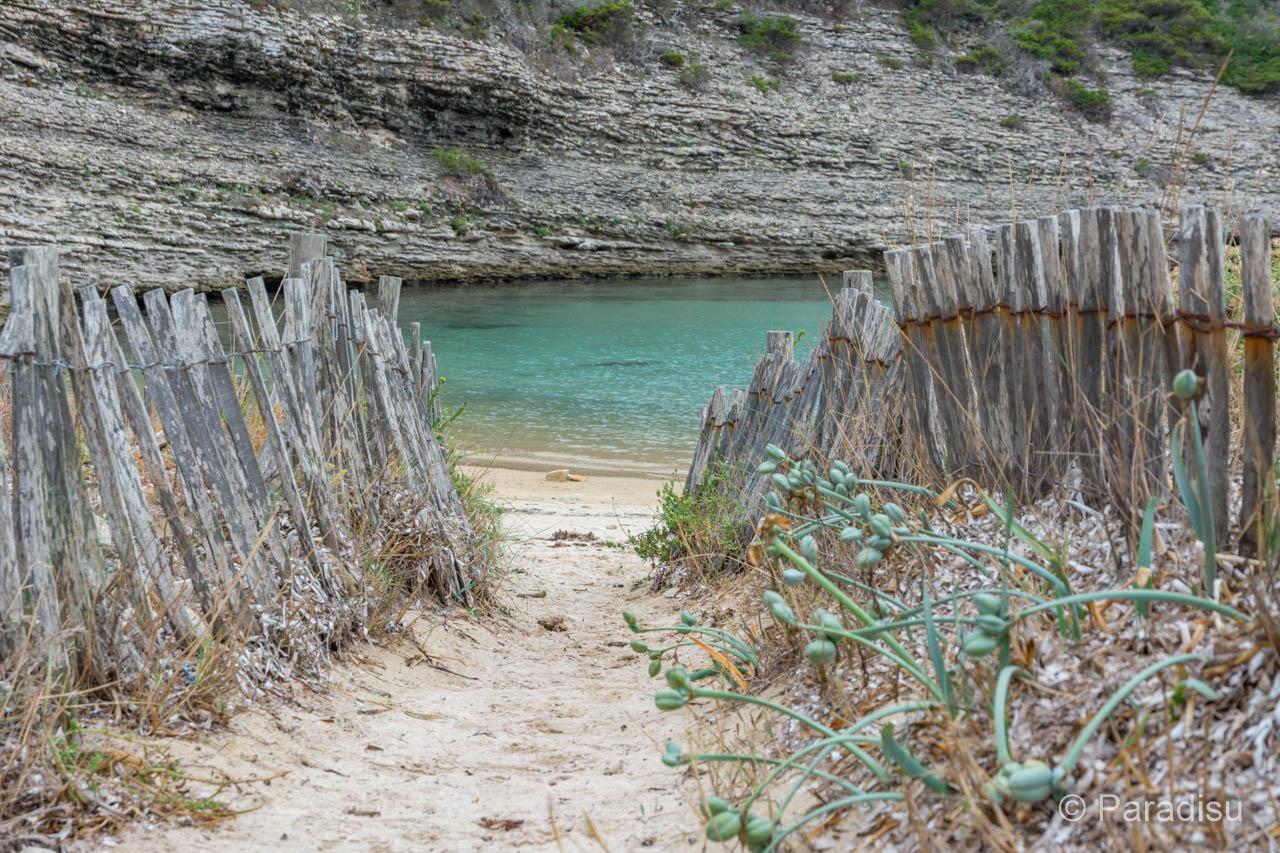 Strand Von Fazzio