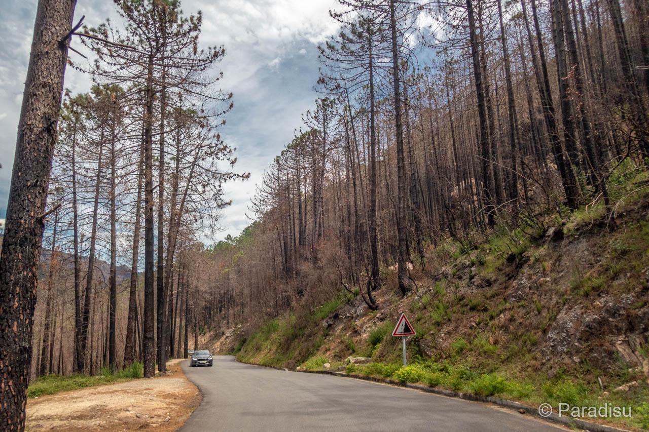 Waldbrand Solenzara