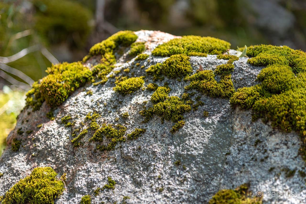 Wanderung Zur Cascade De Radule