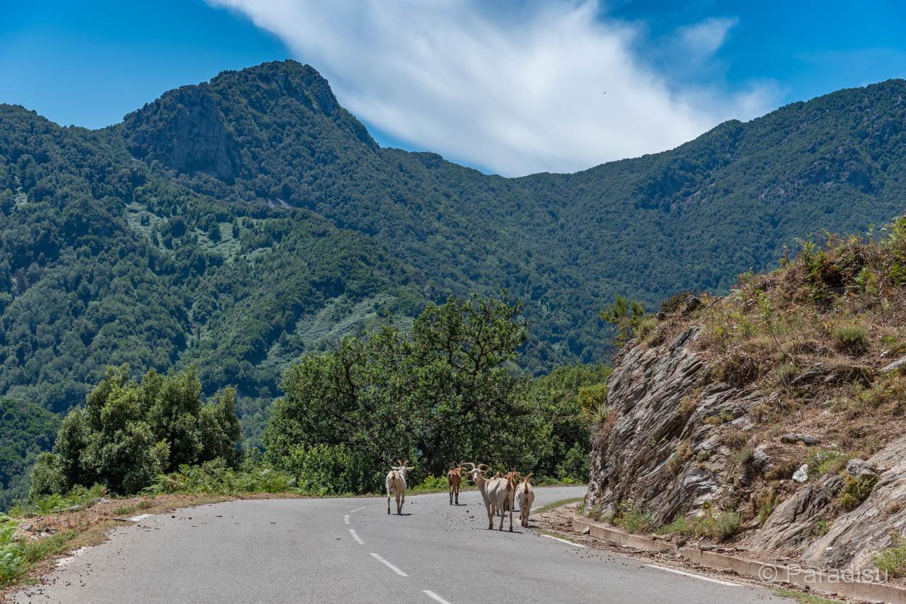 Tierischer Verkehr