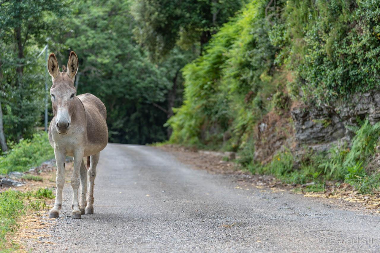 Der Esel Bleibt Stehn