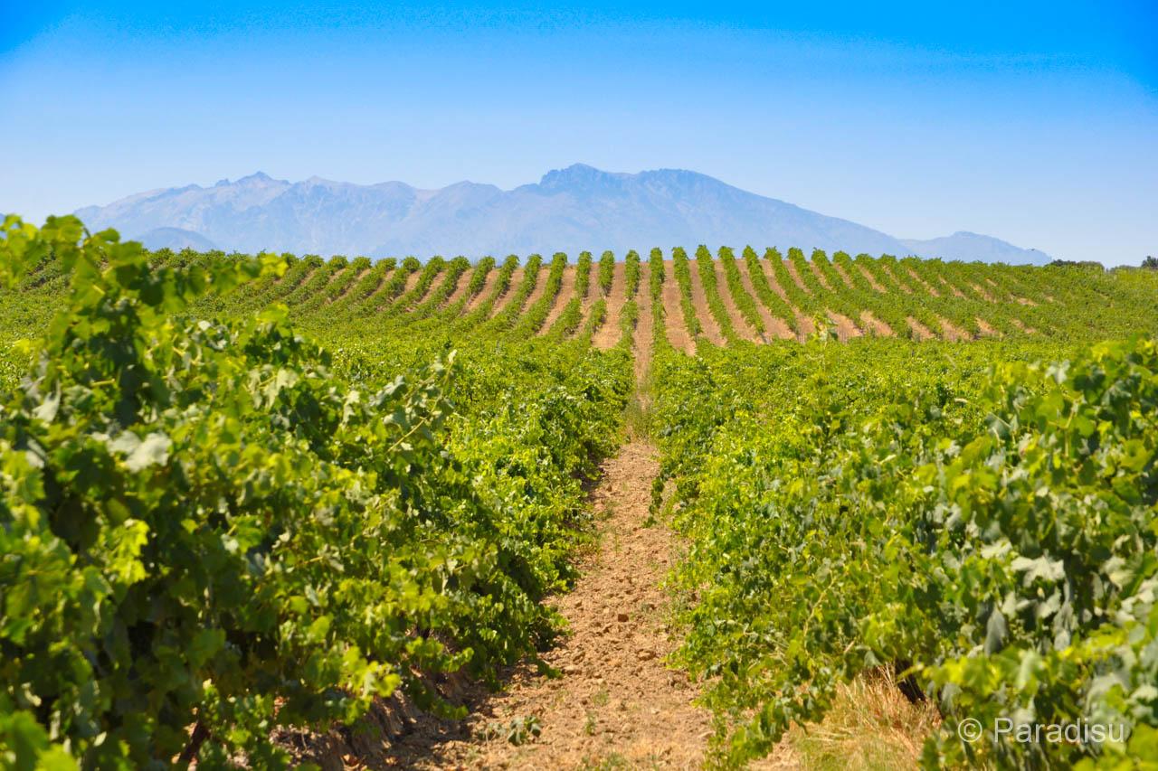 Korsischer Wein